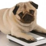 Weight loss solutions made personal for your pet is sometimes needed as well.