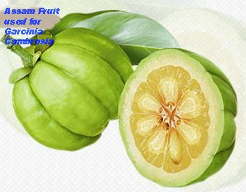 garcinia cambogia helps in fat loss