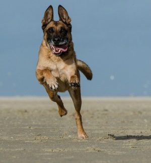 dogs-love-exercise